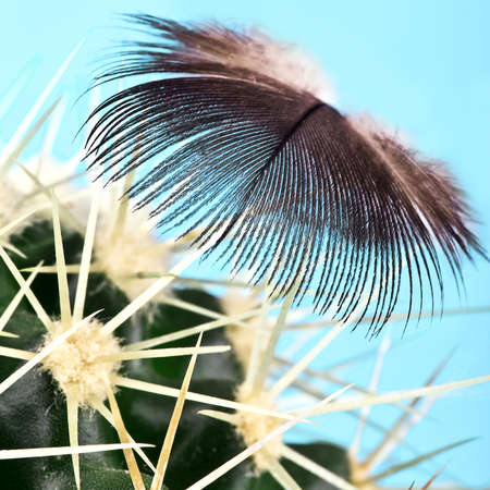 The feather lies on cactus prickles