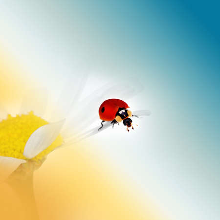 Ladybird sitting on a camomile Stock Photo - 10654759