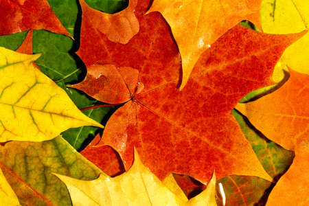 Macro of Autumn leaves Stock Photo