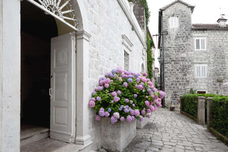 Old town street with flowers