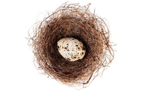 Nest With one Egg