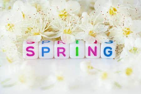 The word spring surrounding white flowers Stock Photo