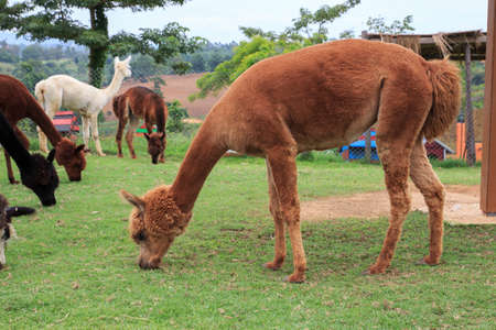 inquisitively: Alpaca is so cute any time. I love it.