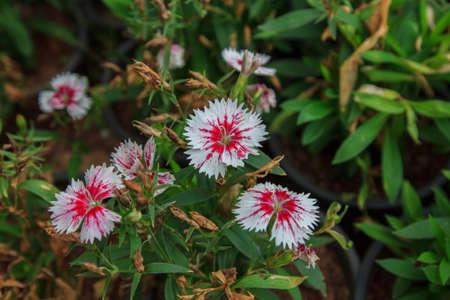 amasing: amasing flower in thailand