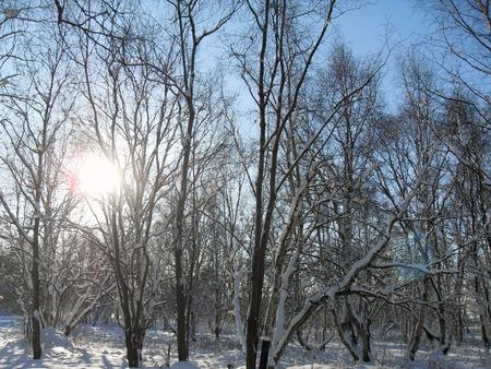 winter forest Фото со стока - 50817667