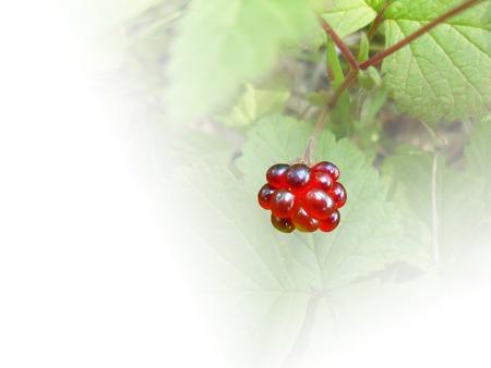 ordinary: Raspberry ordinary