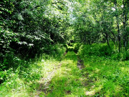 Trail on the hill Фото со стока - 51473019