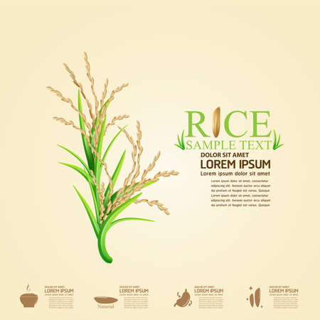 rice plant: Rice Vector Template