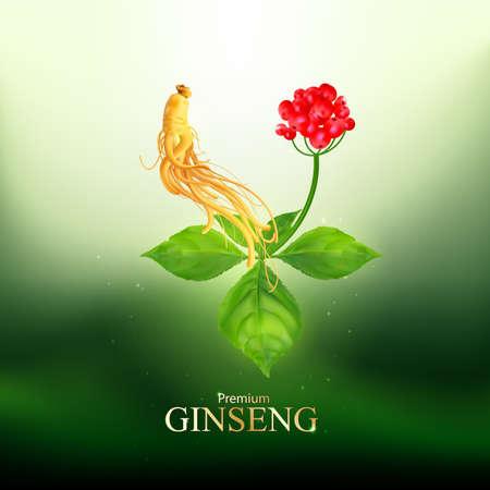 Ginseng Premium Vector Ilustracja
