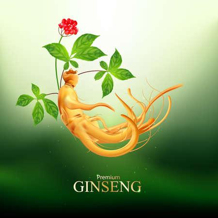 Ginseng Premium Vector  イラスト・ベクター素材