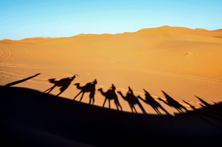Camel shadows on Sahara desert sand dunes in Morocco