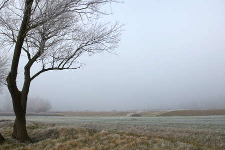 Lonely tree in the field on a very foggy day photo