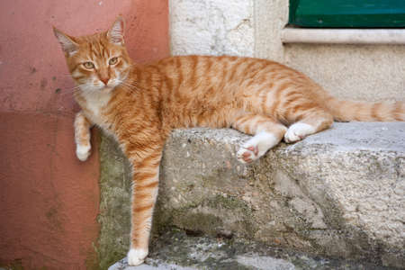 Orange cat resting on a mediterranean street