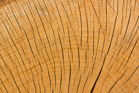 The texture of wood cut across. Can be used as background. photo