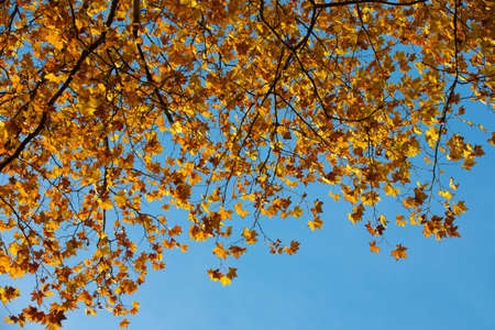 Autumn leaves with the blue sky background photo