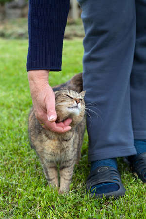 rubbing noses: Woman petting a gray cat