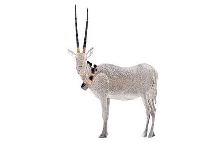 Wild arabian oryx leucoryx made of fine gold on white background  . The Arabian Oryx is Qatars national animal.