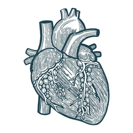 Heart Heart engraving style sketch drawing. Hand drawn heart vector illustration. 일러스트