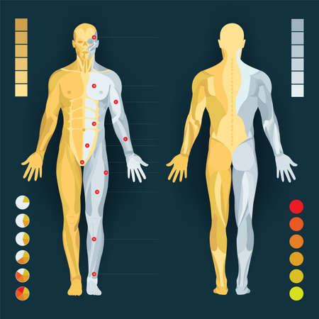Human anatomy diagram. Human body anatomy and pain charts. Male body muscular system. Part of set.