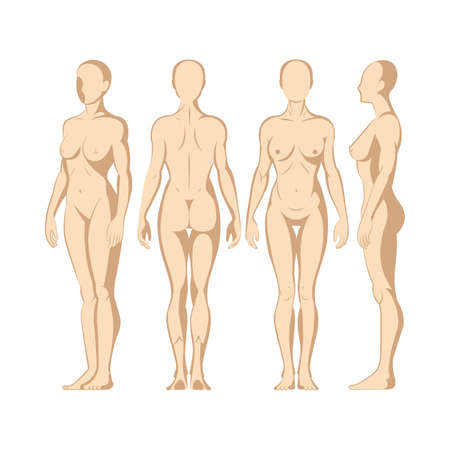 Female body. Hand drawn female body in different poses set. Woman body front, side and back view isolated vector illustration. Woman naked full length figure sketch drawing. Part of set. Vettoriali