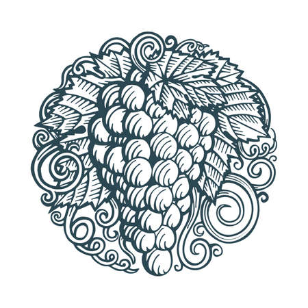 Grape Hand drawn grape and vine engraving style illustrations set. Bunch of grapes vector design element. Grape and vine  and background. Wine theme grape and vine vintage style ornament. Part of set. 写真素材 - 151060450