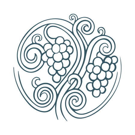 Grape and vine hand drawn vector illustration. Grapevine engraving style drawing. Part of set. 写真素材 - 151060572