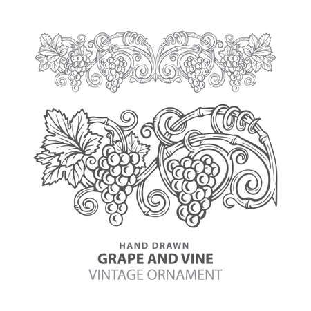 Grape Hand drawn grape and vine engraving style illustrations set. Bunch of grapes vector design element. Grape and vine logo and background. Wine theme grape and vine vintage style ornament. Part of set. 写真素材 - 151140857