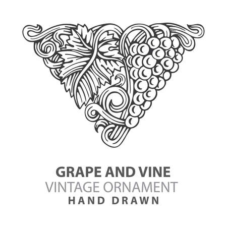Grape Hand drawn grape and vine engraving style illustrations set. Bunch of grapes vector design element. Grape and vine logo and background. Wine theme grape and vine vintage style ornament. Part of set. 写真素材 - 151140883