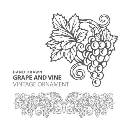 Grape Hand drawn grape and vine engraving style illustrations set. Bunch of grapes vector design element. Grape and vine logo and background. Wine theme grape and vine vintage style ornament. Part of set. 写真素材 - 151140890