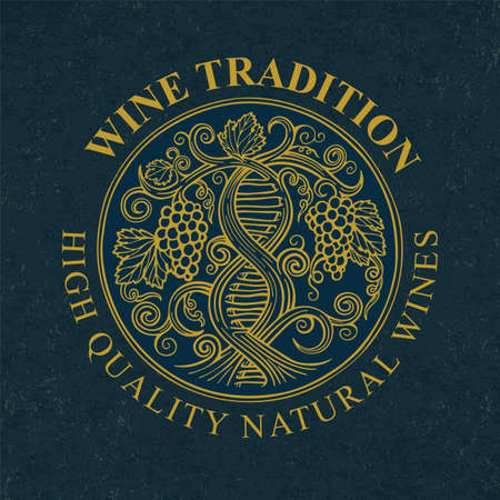 Grape and vine. Wine making tradition concept. DNA and infinity symbols drawn with grape vine. Hand drawn vine and grape bunch engraving style illustration. Part of set.