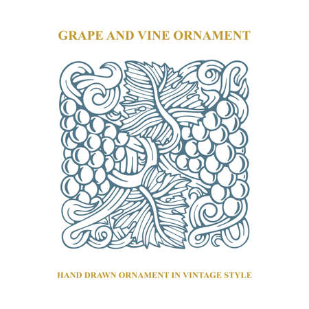 Grapes. Grape and vine engraving style hand drawn vector illustration. Grape and vine ornament. Part of set.