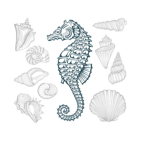 Seahorse and Seashells. Different sea shells hand drawn vector illustrations set. Part of set.