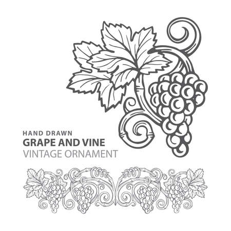 Grape Hand drawn grape and vine engraving style illustrations set. Bunch of grapes vector design element. Grape and vine logo and background. Wine theme grape and vine vintage style ornament. Part of set.