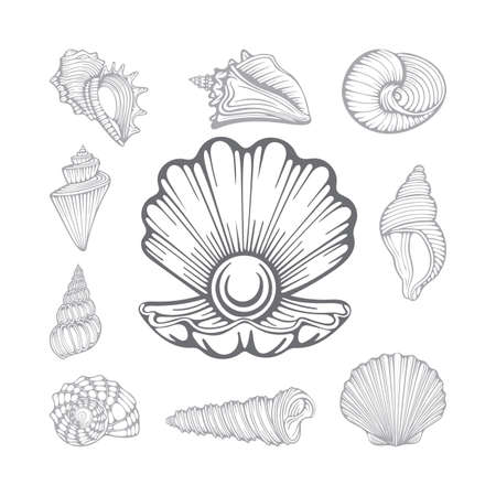 Open pearl shell and seashells. Different sea shells hand drawn vector illustrations set. Part of set.