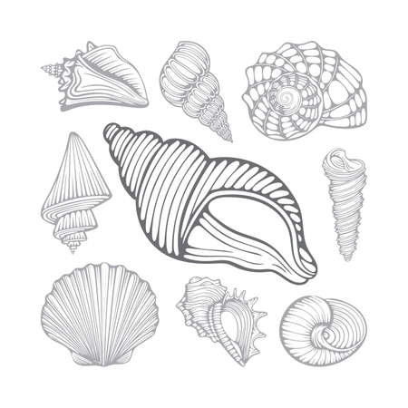 Seashells. Different sea shells hand drawn vector illustrations set. Part of set.