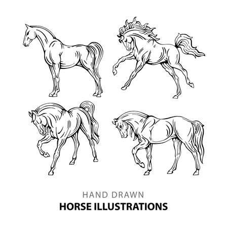 Horse Hand drawn horse illustrations set. Sketch drawing horses in different poses. Vettoriali