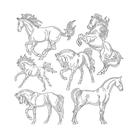 Horse Hand drawn horse illustrations set. Sketch drawing horses in different poses.