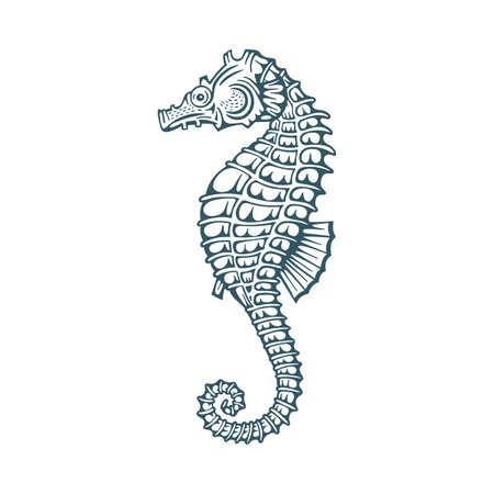 Seahorse. Seahorse hand drawn vector illustrations set.