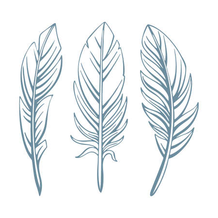 Feathers. Hand drawn feathers vector illustrations set. Feathers sketch drawing. Feathers vintage style graphic.