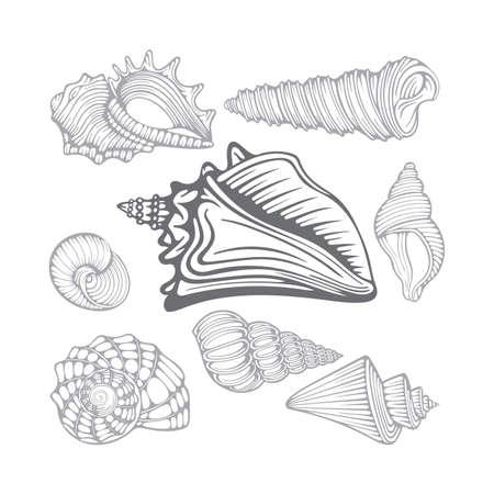 Seashells. Different sea shells hand drawn vector illustrations set. Part of set.