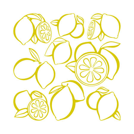 Lemon. Citrus collection. Hand drawn lemons vector illustrations set. Part of set. 矢量图像