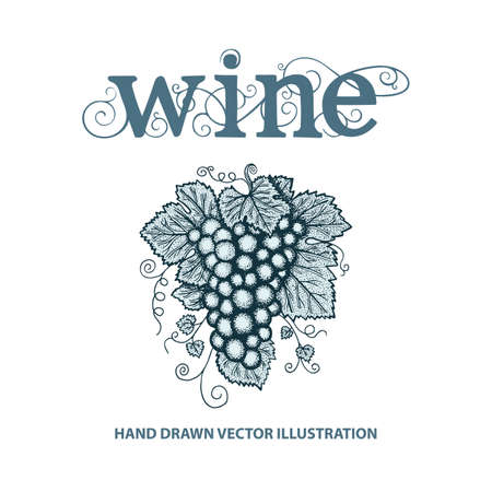 Wine and Grape. Hand lettering text wine written with lower case letters. Word wine with grape vines and grape bunch illustration. Wine theme hand drawn vector design template.