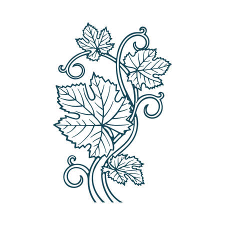 Hand drawn grape leafs and vine vector illustration. Floral drawing background ornament. Part of set. Illustration