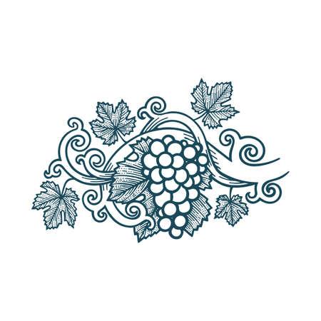 Grape bunch, vine and leafs. Grape vine vintage style hand drawn vector illustration. Part of set.