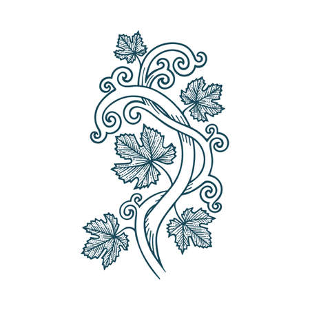 Grapevine vintage style hand drawn vector illustration. Part of set. Stock Illustratie