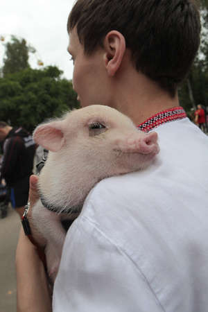 animalitos tiernos: St. Petersburg, Russia - September 20, 2015:  A little pig at the hands of a man on a city festival of meat.
