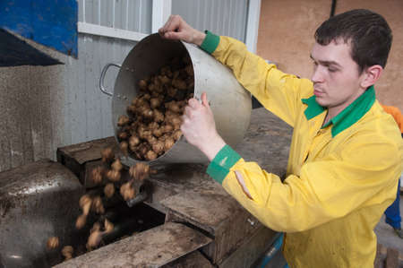 inulin: St. Petersburg, Russia - March 2, 2015: The production line for the processing of Jerusalem artichoke as a medicine for diabetes, gout and obesity
