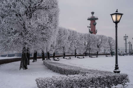 Neva embankment in the frosty winter evening. Rostral column, trees in frost, the city lights. The main attraction of the city. Saint-Petersburg, Russia.
