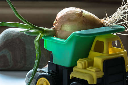 forcing: Sprouted onion in the back of the truck child. Childrens car carries on itself the green vegetables. The symbol of good harvest