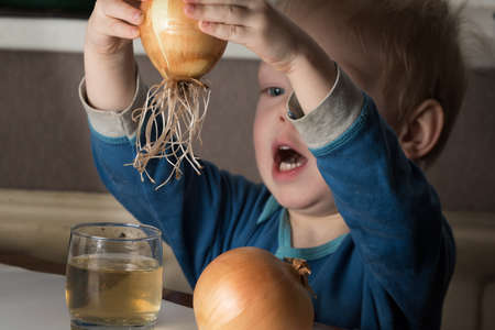 1 2 years: Blonde child aged 2-3 years old playing with green onion germinating onion, which is on the table.